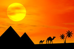 Camels At Sunset. 3d image of camels silhouette in the desert at sunset Royalty Free Stock Photos