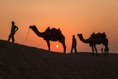 Camels and Sunset at Thar Desert Royalty Free Stock Image