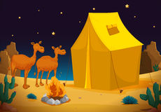 Camels and tent. Illustration of camels and tent in dark night Stock Photos