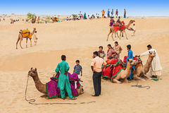 Camels in Thar desert Royalty Free Stock Photography