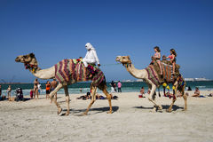 Camels, tourists, beach Dubai Royalty Free Stock Images