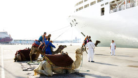 Camels for tourists in La Goulette, Tunisia Royalty Free Stock Images