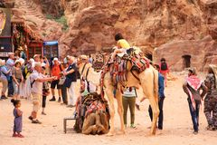 Camels and tourists in Petra, Jordan Royalty Free Stock Photography