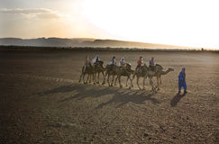 Camels train Royalty Free Stock Photo