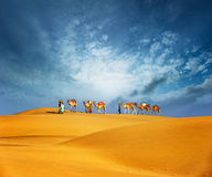 Camels travel through sand of desert dunes. Adventure journey