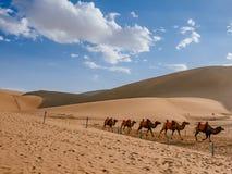 Camels traveling among sand dunes and desert at Mingsha Mountain, Dunhuang, Gansu, China royalty free stock photography