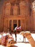 CAMELS AND THE TREASURY, PETRA, JORDAN Stock Photo