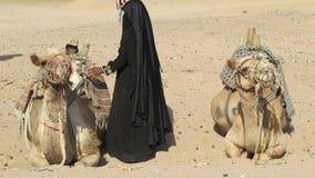 Camels. Two camels in Sahara, Egipt, jeep safari Stock Images
