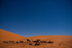 Camels under the constellation of the Great Bear Stock Photography