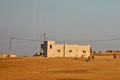 Camels in Village Stock Image