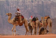 Camels in Wadi Rum, Jordan Royalty Free Stock Image