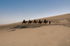 Camels walking across the sand dune Stock Photo