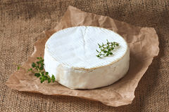 Camembert cheese delicious round french dairy food Royalty Free Stock Photos
