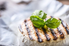Camembert cheese. Grilled camembert cheese with olive oil and basil leaves Stock Photos