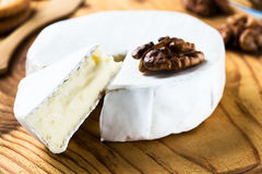 Camembert  cheese slice dipped with walnuts Royalty Free Stock Images