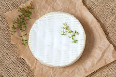 Camembert cheese traditional Normandy French Royalty Free Stock Photo