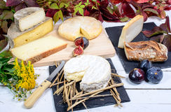 Camembert of Normandy with different  cheeses Royalty Free Stock Photography