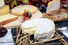 Camembert of Normandy with different  cheeses Royalty Free Stock Image