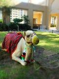 Camer som är klar för kamelritt Royaltyfri Fotografi