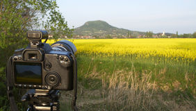Camera. Take a photo of rape field Royalty Free Stock Image