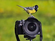 Camera. stock photos