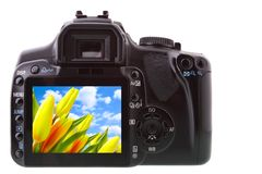 Camera. Black DSLR camera from rear isolated over white backgrouhnd Stock Images