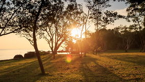 Camera along Beach Sun through Leaves at Sunset by Sea. Camera moves along grass beach glade sunlight through tree leaves with long tree shadows near sea at stock footage