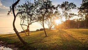 Camera along Beach to Stream Sun through Leaves at Sunset. Camera moves along grass beach to small stream sunlight through tree leaves with long tree shadows stock video footage