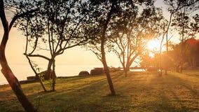 Camera along Beach to Stream Sun through Leaves at Sunset. Camera moves along grass beach to small stream sunlight through tree leaves with long tree shadows stock video