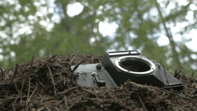the camera in the anthill stock footage