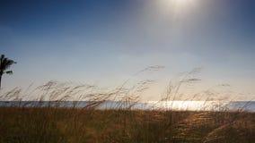 Camera Approaches Sun Sunlight Reflection in Sea Grass on Beach stock video