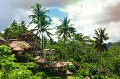 Camera Bali Indonesia del terrazzo del riso di Tegalalang Fotografia Stock Libera da Diritti