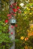 Camera blu dell'uccello circondata dalle foglie nei colori di caduta Immagini Stock