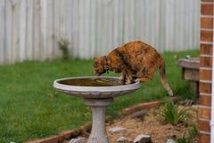 Camera Cat Drinking dal bagno dell'uccello fotografia stock