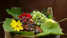 The camera circles around autumnal composition .Camera rotates around a grapes stock video footage