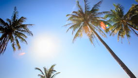 Camera Circles Palms from Downward Bright Sun Sky. Camera circles high palms from downward against bright white sun and blue sky stock footage