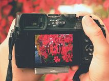 Free Camera Close To Red Autumnal Leaves To Take Impressive Photos Stock Photography - 165028672