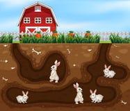 Camera del coniglio sotterranea l'azienda agricola illustrazione vettoriale