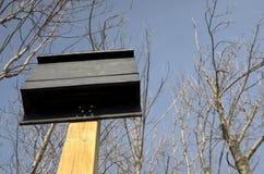 Camera del pipistrello sulla posta di legno Fotografie Stock