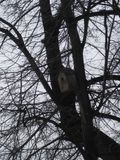 Camera dell'uccello nell'albero fotografia stock libera da diritti