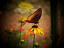 Camera della farfalla dell'insenatura del faggio Immagini Stock Libere da Diritti
