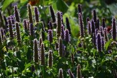 Camera di Cragside e giardini Northumberland fotografia stock libera da diritti