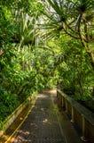 Camera di palma, giardini botanici reali di Kew, Londra, Regno Unito fotografie stock