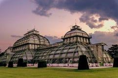 Camera di palma nel parco a Vienna fotografie stock