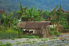 Camera di un agricoltore povero, Bali, Asia Fotografie Stock