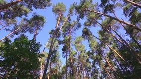 Camera die lage die hoek spinnen door oude de groeibomen wordt geschoten stock footage