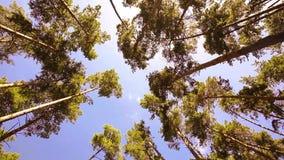 Camera die lage die hoek spinnen door oude de groeibomen wordt geschoten stock videobeelden