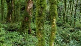 Camera die zich binnen het geheimzinnige groene bos bewegen stock video