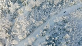Directly above large forest and driving car on road in the cold winter stock footage