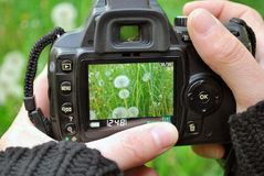 Camera Display With Plants Royalty Free Stock Photography